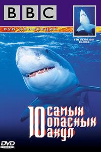 Смотрите онлайн 10 самых опасных акул