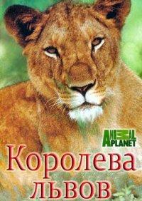 Постер к фильму Королева львов